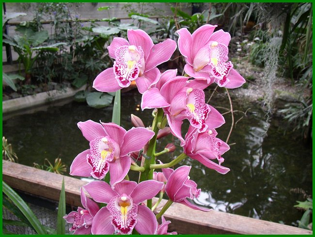Orchideen im tropischen regenwald  Ein Besuch im Tropengarten