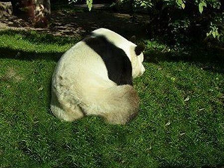"""Panda """"Bao Bao"""""""